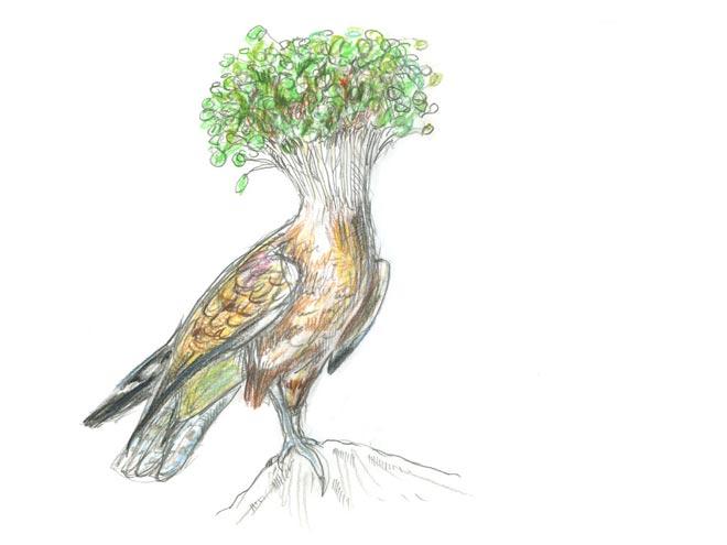 Falcon Cress