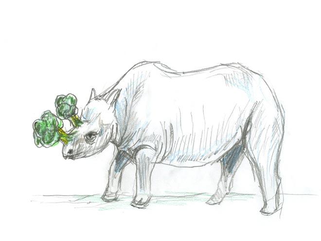 Rhinocolli